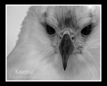 Eagle by Kreaniji-PHOTOGRAPHY