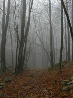 foggy bg1 by wroquephotography