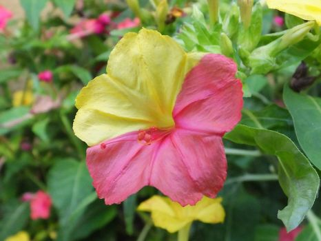 The flower which God colored by osam-devet