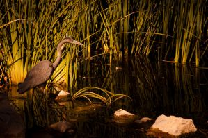 Among The Reeds by Navina