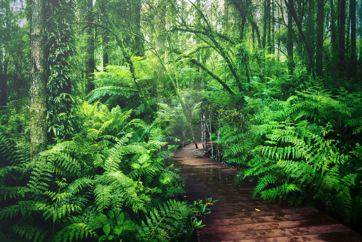Premade Rain Forest by AlexandriaDior