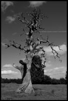The Old Dying Tree by Hitomii