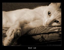 tired cat by dianasabbath