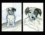 Jack Russell Terriers by calzephyr