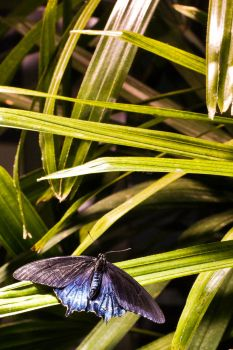 Butterfly Among the Leaves by W-L-Designs