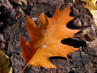 Oak Leaf by paintintheneck