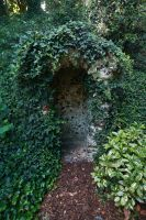 Ivy hide out. by NickiStock