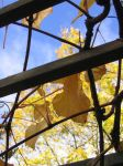 Fall Frames 2 by axcho