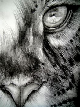 Eye of the Tiger by free-sia
