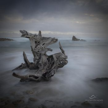 driftwood seascape by letsgofishing3