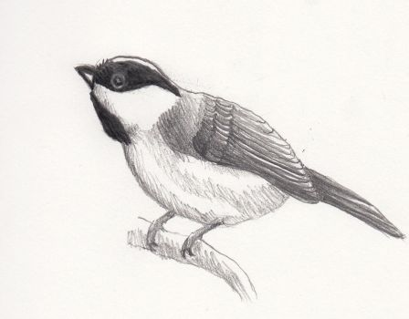 Chickadee by desertwind75