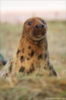 Seal 4 by Alannah-Hawker