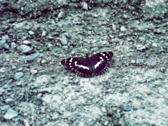 butterfly by 0Just0My0Dreams0