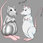 Ratties by ChovexaniArt