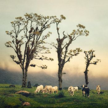 Life in the Highlands by Miguel-Santos