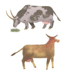 Cows by hayfootstrawfoot