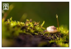 Little World by SchwarzWieEbenholZ