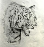 Roaring Tiger by FreedomSparrow3