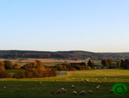 The Bleating Meadow by Idraemir