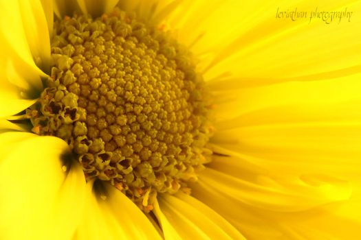 So Much Yellow by DamiasPhotos