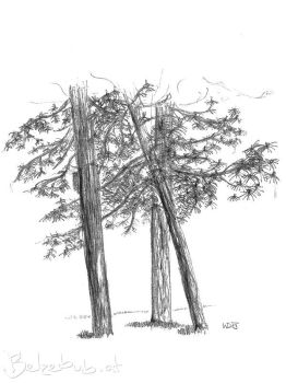 Pine Tree by 5dave