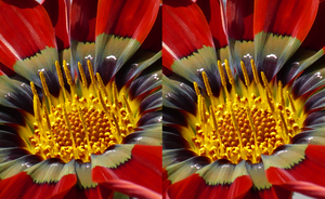 Blumi close - stereoscopic 3D by Hector42