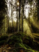 Mystic Forest Premade by MagicAngel8773