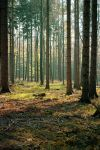 Forest Stock 41 by Sed-rah-Stock