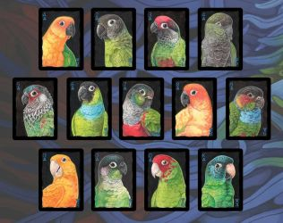 Parrots of the World: Conures by maggock