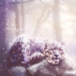 Winter by tamaraR