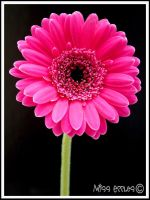 Pink by misseccles