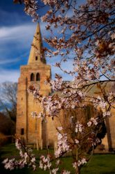 Blossom Tree by newcastlemale