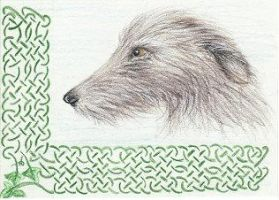 Irish Wolfhound ACEO by arikla