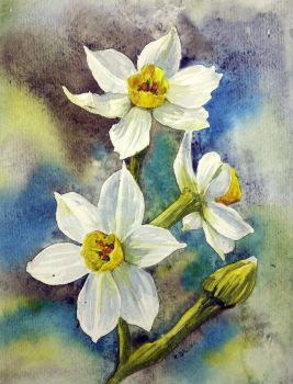 Narcissi by Kajko