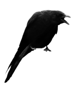 crow 5 by peroni68