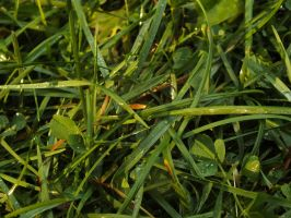 Grass by Dezkaster