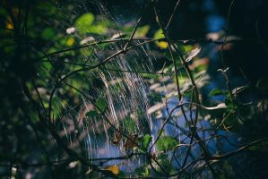 Colorful Web by BlackRoomPhoto