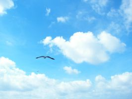 Flying Seagull 3 by photohouse