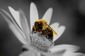 bee on a flower. by iheartgeorgesampson