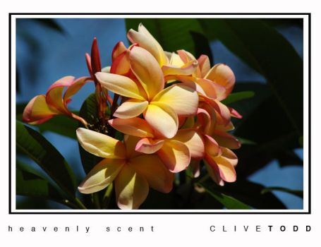heavenly scent by Shmaff