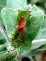 SHIELBUGS by Iris-cup