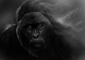 Old Gorilla by Delun