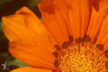 Daisy Closeup WP by dssken