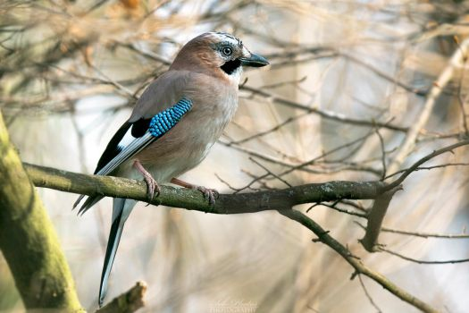 My name is Jay by Seb-Photos