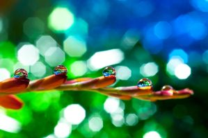 Bokeh wonderland by pqphotography
