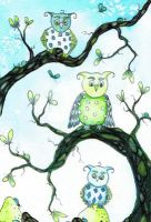 little blue green owls by dragonflywatercolors