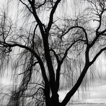 Weeping Willow by Cattereia