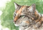 Scheming Tortie ACEO by Pannya