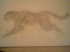 Cheetah by Spotted73