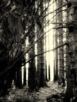 macabre forest by gold-paroles